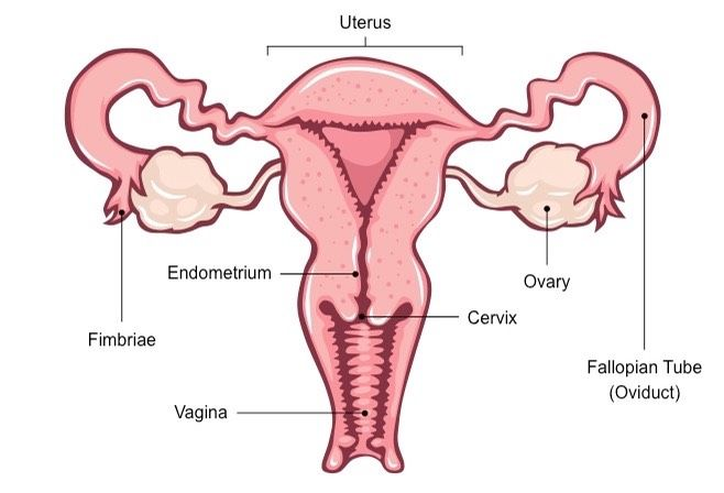 cancer genital feminin symptome