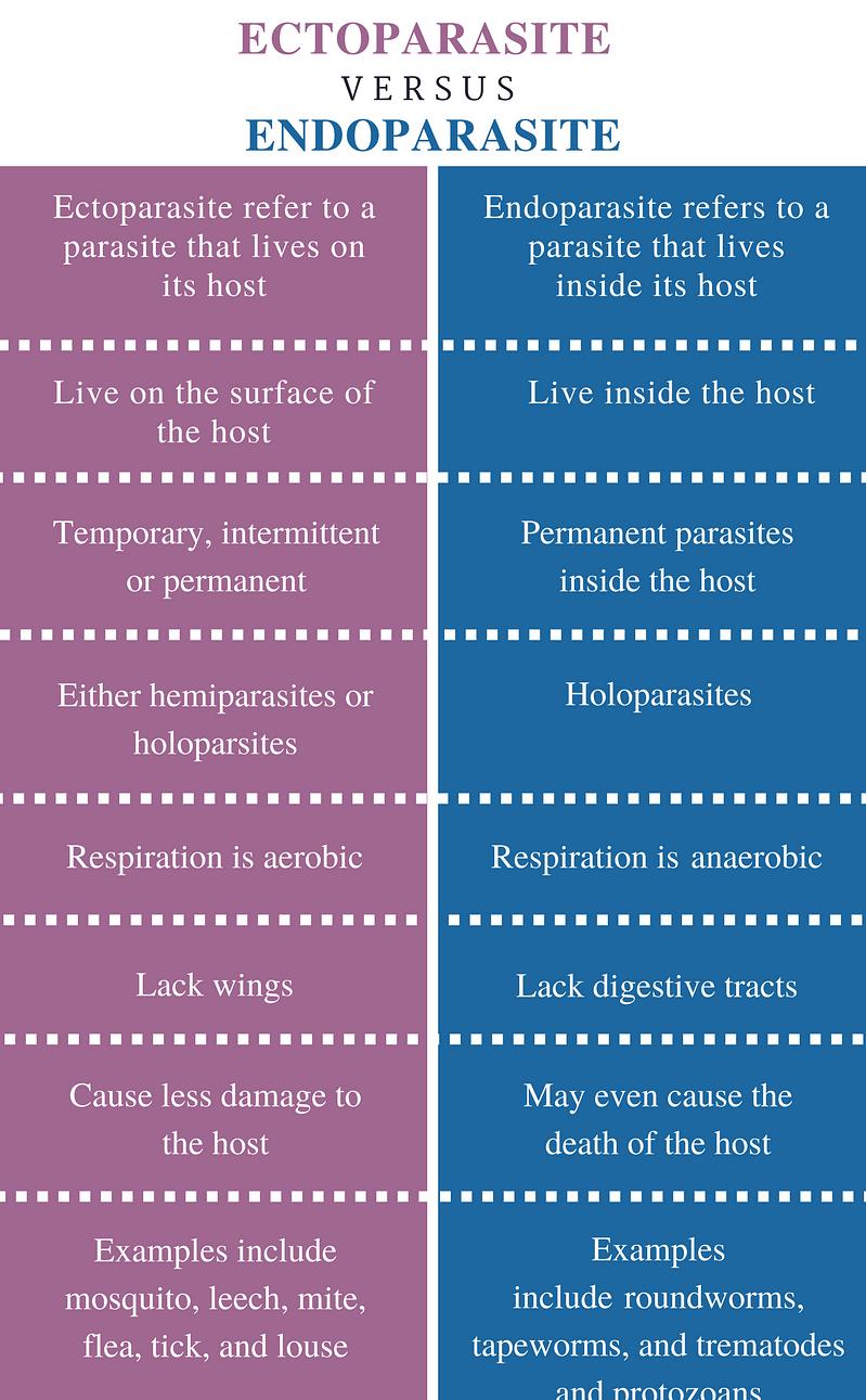 Endoparaziți vs. Ectoparaziți - Sănătate -