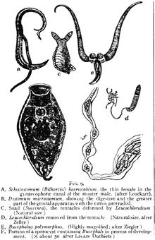 flatworms - Traducere în română - exemple în engleză   Reverso Context