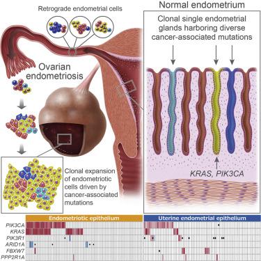 tratament paraziti intestinali naturist