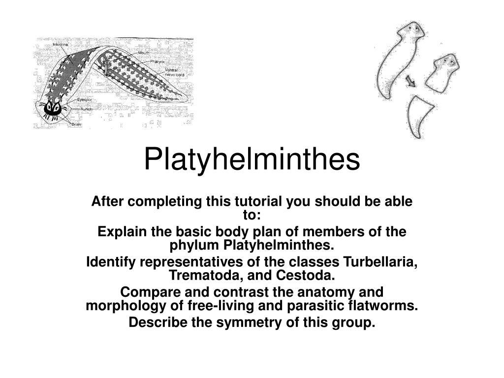 Phylum platyhelminthes clasa trematoda, Platelminți