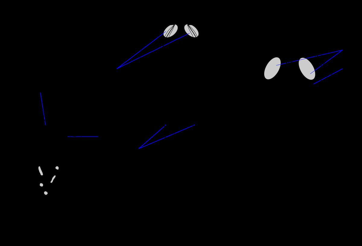 morfologia giardiozei papilloma virus hpv 45