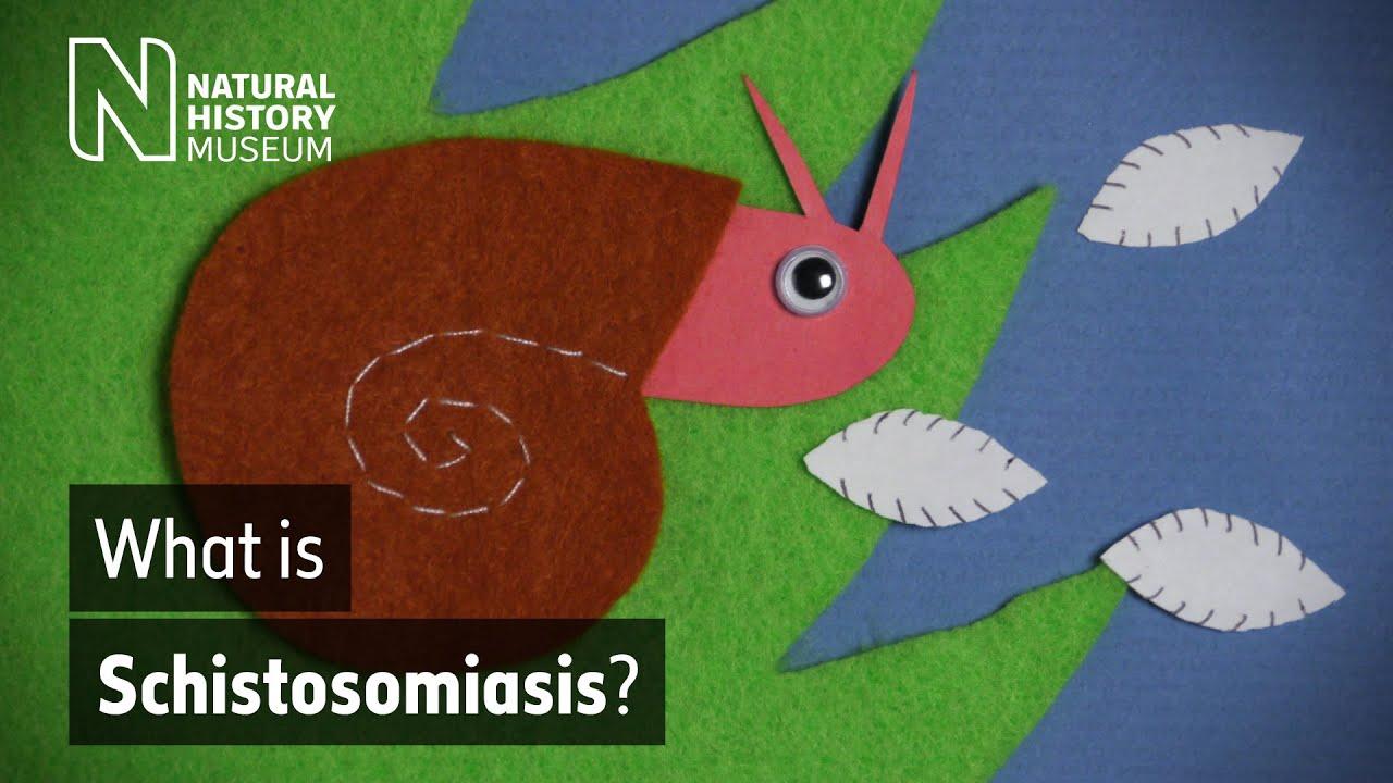 Schistosomiasis blood test