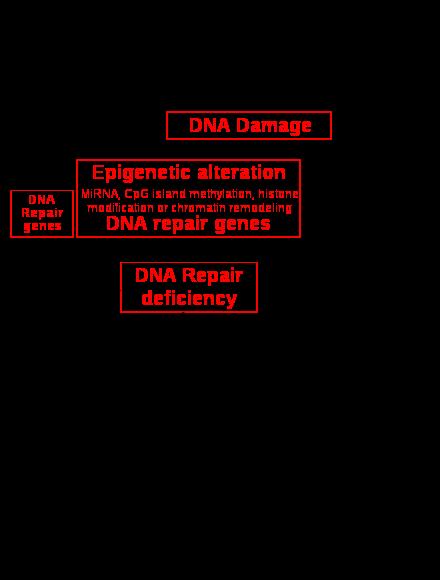 Cancerul pulmonar tratament, Cancer metastatico cid