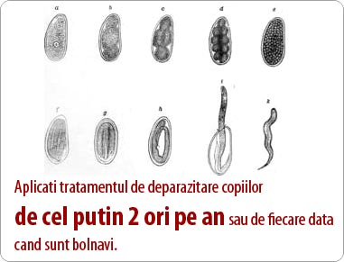 tratamentul viermilor viermi la adulți ectoparaziți și endoparaziți