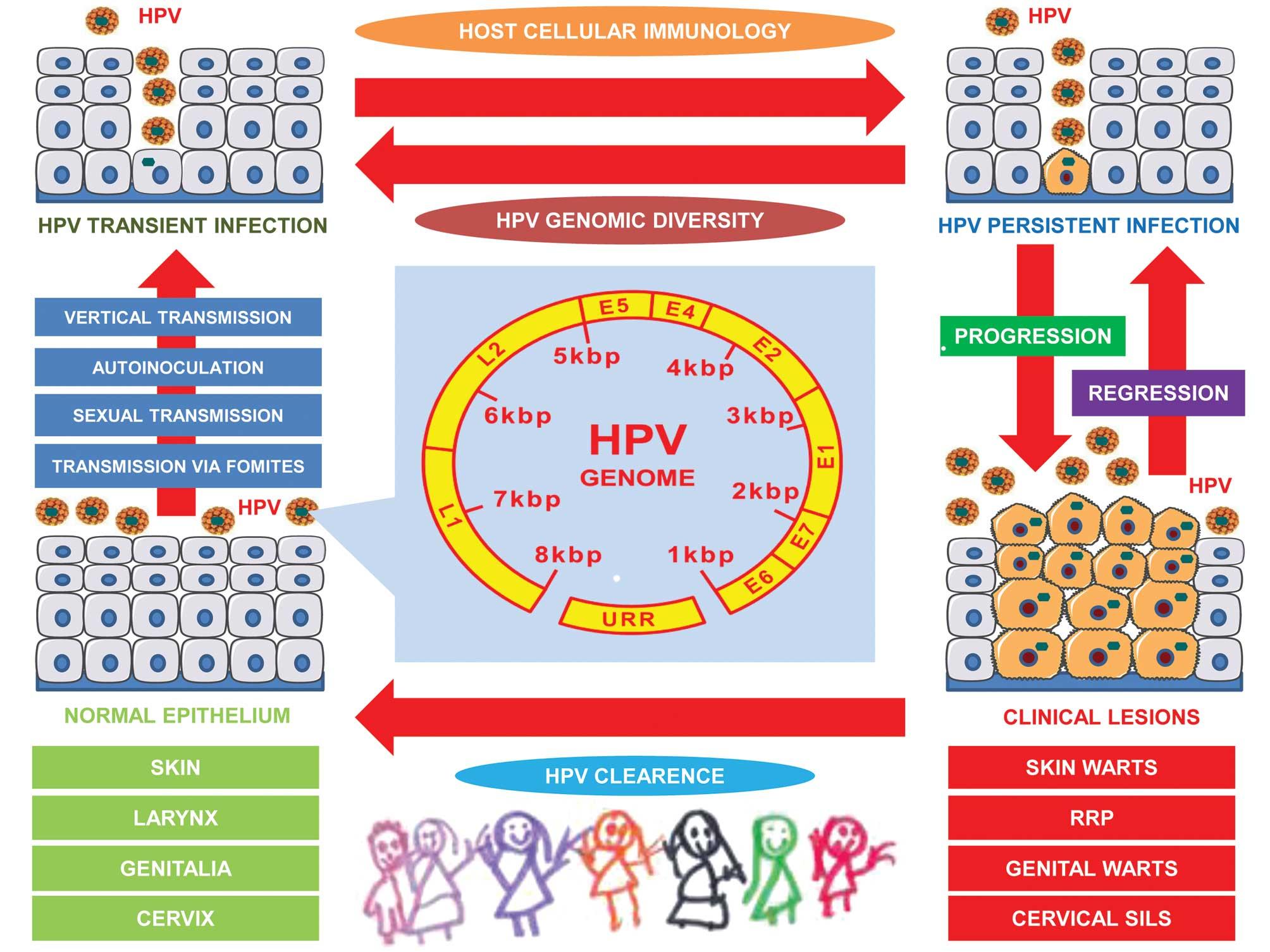 Hpv high-risk c (02)