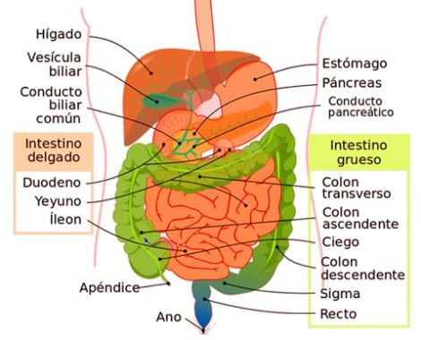 cancer de colon que organos afecta viermi de pin în anus