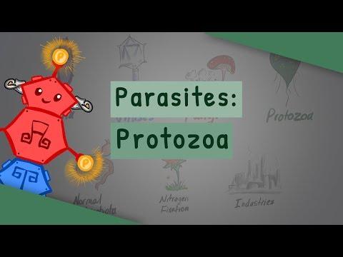 parazitoza manifestari