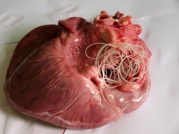 Blog Faunus Plant - Ce sunt și cum se tratează paraziții intestinali?