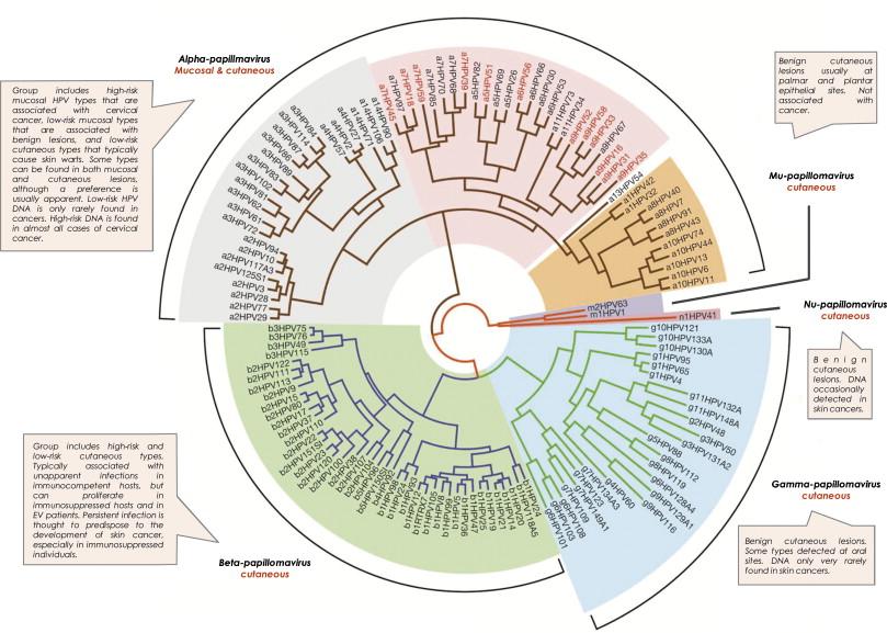human papillomavirus biology cum să elimini viermii din creier