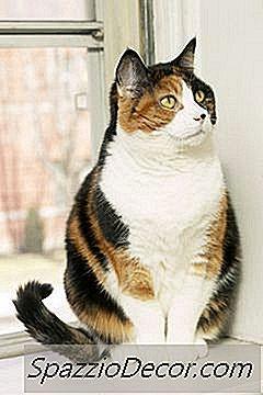 tratamentul giardiei la pisici
