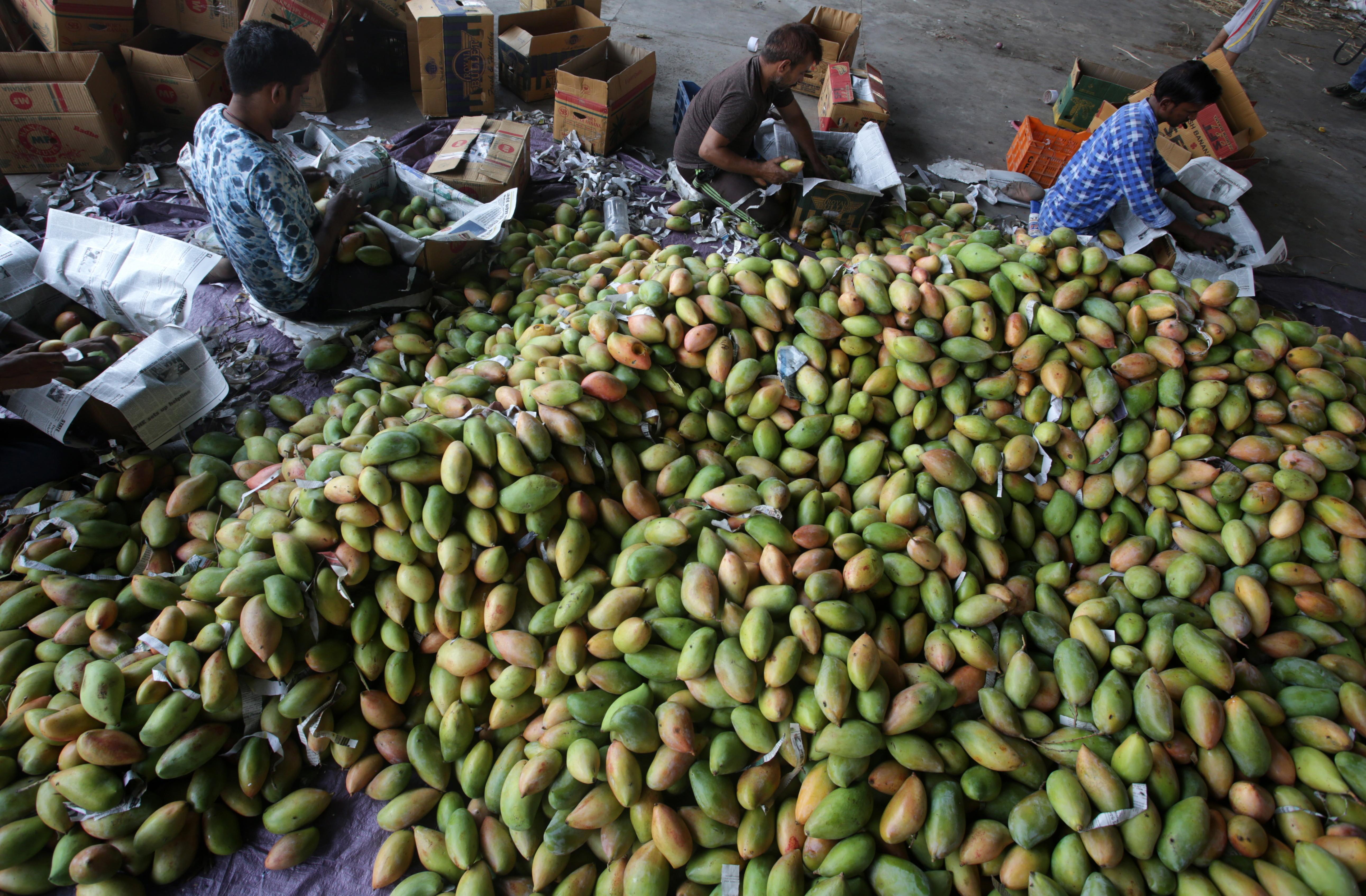 Viermi de mango 5 paraziti care traiesc pe si in pielea omului