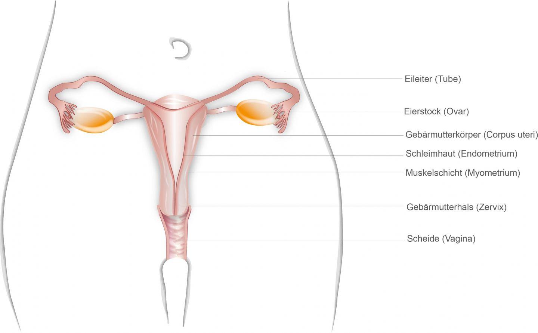 viermisori intestinali poze recenzii de la verucile genitale