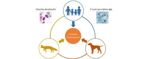 Simptome de giardia și criptosporidiu - Giardioza: cauze, simptome si tratament