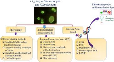 antigenul giardia cryptosporidium