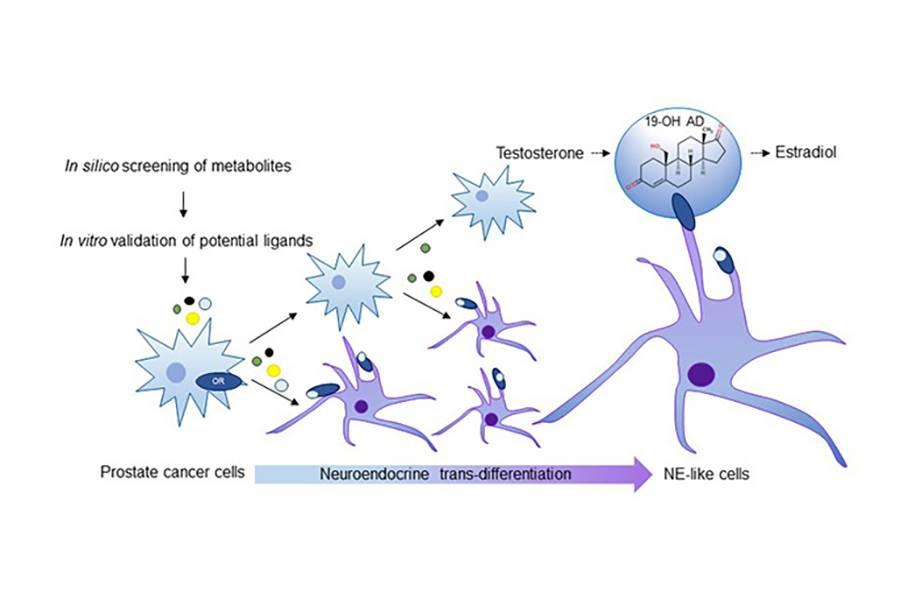 cancer perete abdominal hpv virus gravid