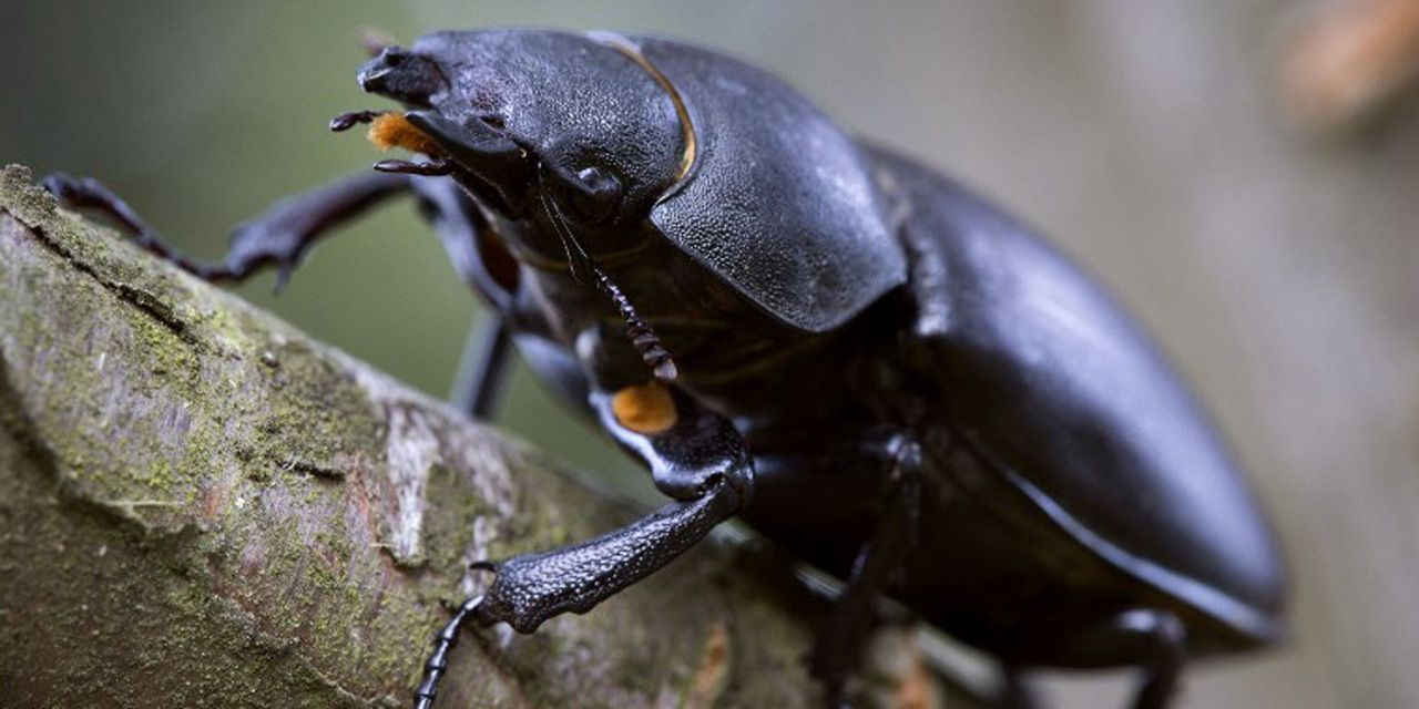 Katsaridafobia: de ce ne e silă de gândacii de bucătărie?