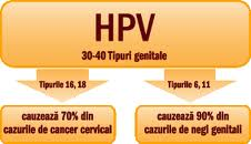 verucile papilomavirusului uman