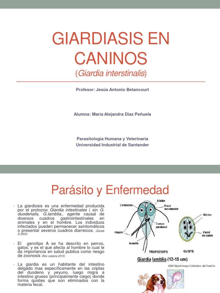 giardia como zoonosis