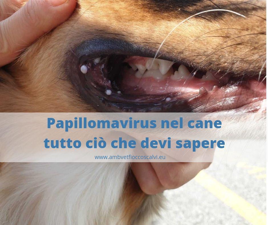 Papilloma virus bocca immagini. Handdestluhanen.ml