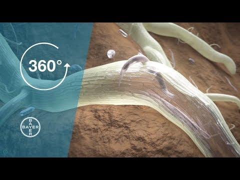 Giardia lamblia ADN