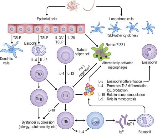 prevenirea tratamentului cu enterobioză papilloma virus guarigione
