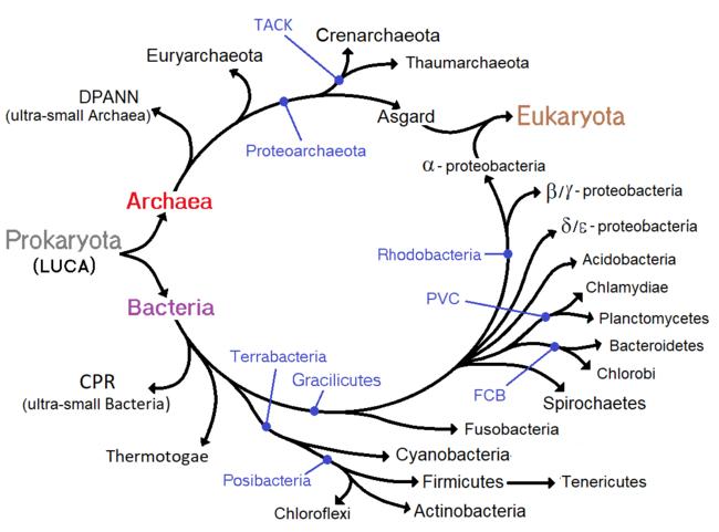 paraziți de răspuns th2 viermi intestinali la pui de gaina