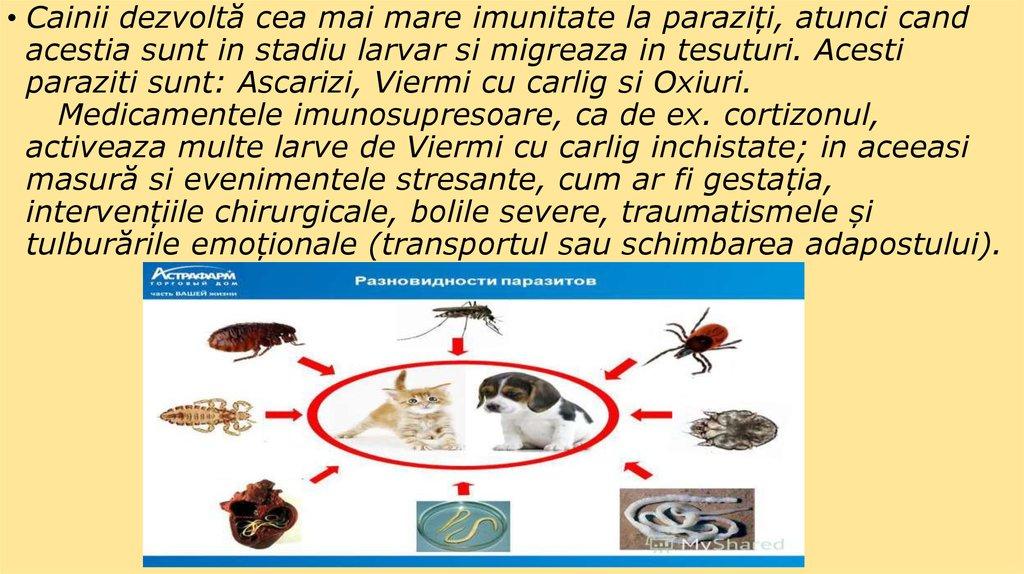 Viermi şi larve - Maxi Pet online