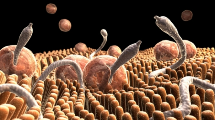 tratamente complexe pentru viermi bacterii ochi