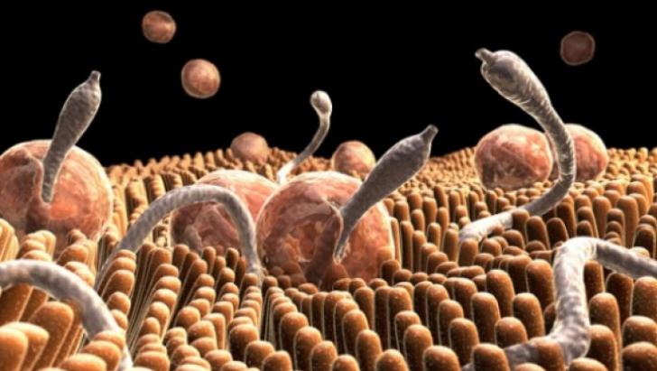 hpv impfung jungen aok niedersachsen papilloma gravidanza