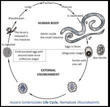 helminths definition microbiology