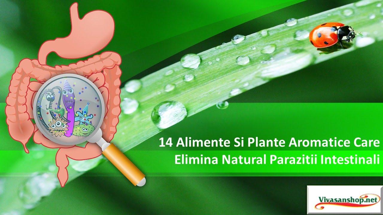 ce sunt parazitii intestinali descărcați vierme