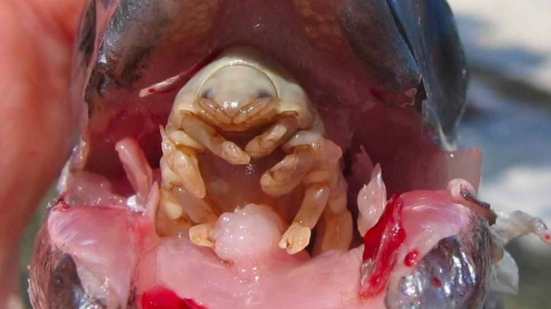 Parazitoza je. Peritoneal cancer risk