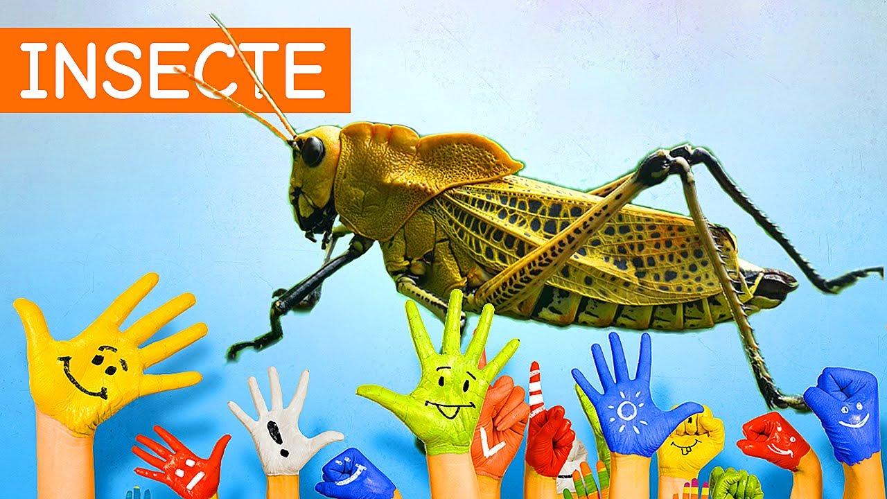 casti de insecte