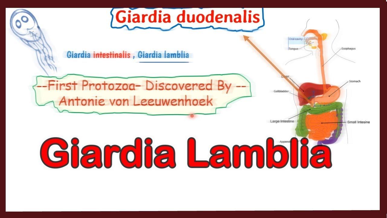 Simptom de giardia