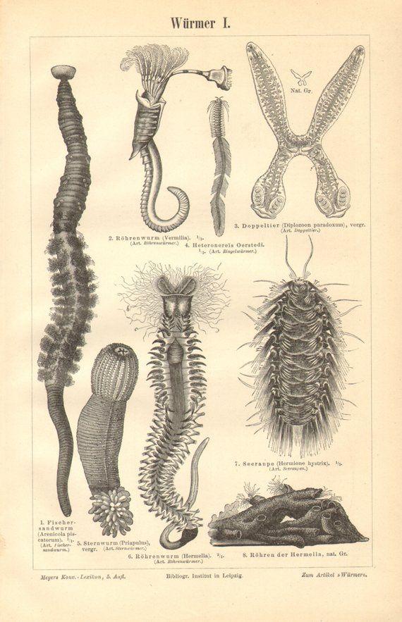 filo platyhelminthes și nematode tableta rotundă de vierme