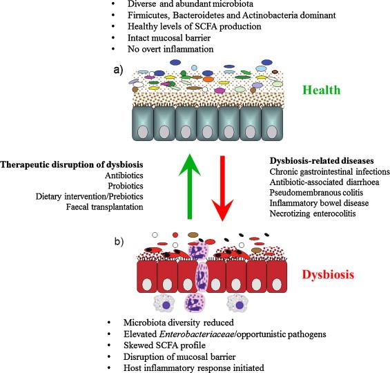 dysbiosis eczema