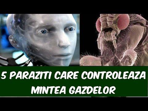 Remedii ruseşti contra paraziţilor intestinali