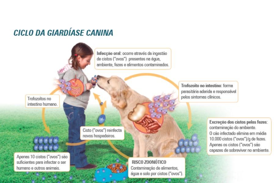 giardia canina o que e squamous papilloma skin histopathology