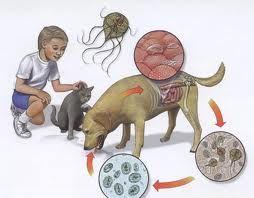 cancer at metastatic criptosporidiu și giardia