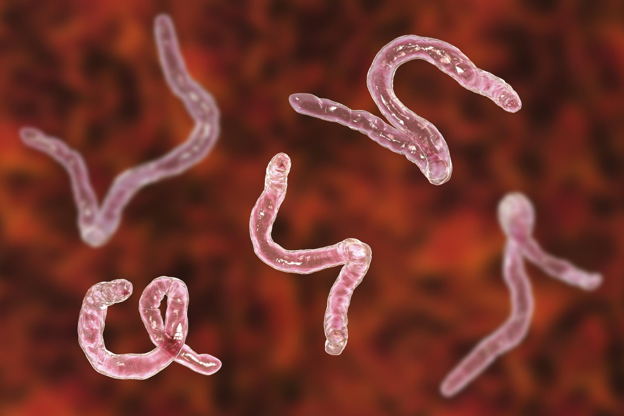 Giardia u kota objawy - Viermi ascorida