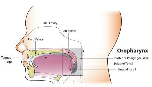 symptoms of inverted nasal papilloma tratamentul infecției cu paraziti umani