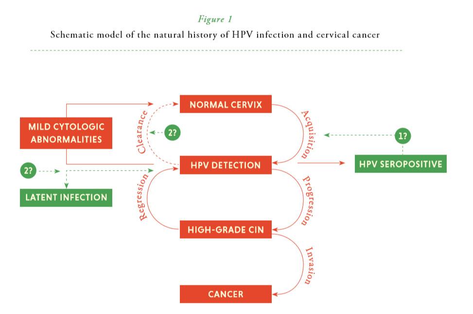 hpv virus latent i kroppen