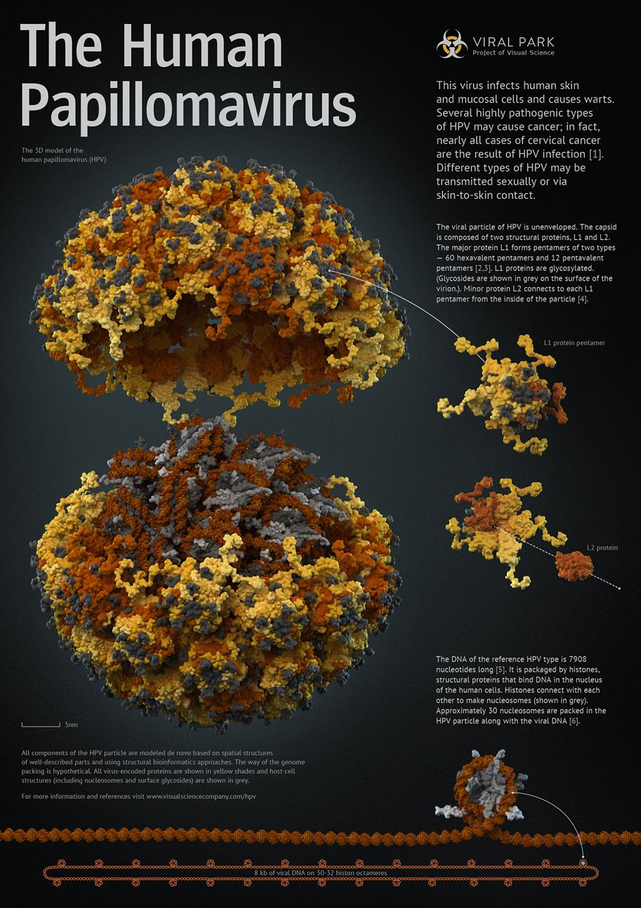 human papillomavirus biology virus papiloma mujer