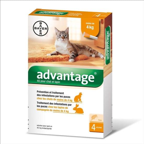 kedi ense damlas n yalarsa ne olur papiloma virus en el embarazo