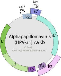 hpv virus ferfiaknak ce inseamna detoxifierea ficatului