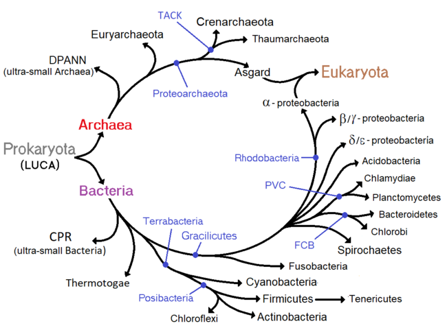 Paraziți de răspuns th2, Imunofenotipare limfocitara-profil de baza | Synevo Moldova