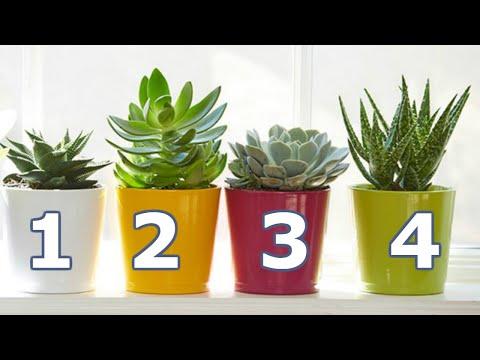 Ingrijirea plantelor de apartament. Sfaturi pentru gradina din casa - Tettu