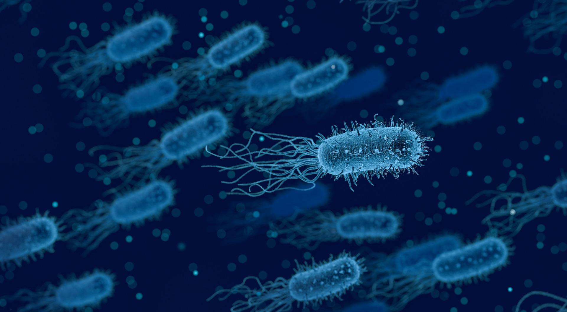 paraziti zdravljenje