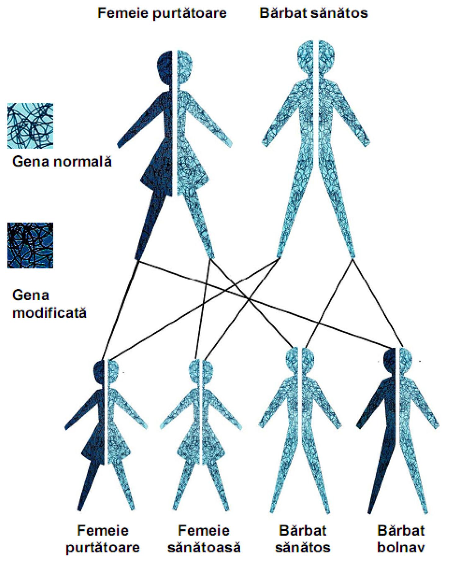 patologii de transmitere a teniozei